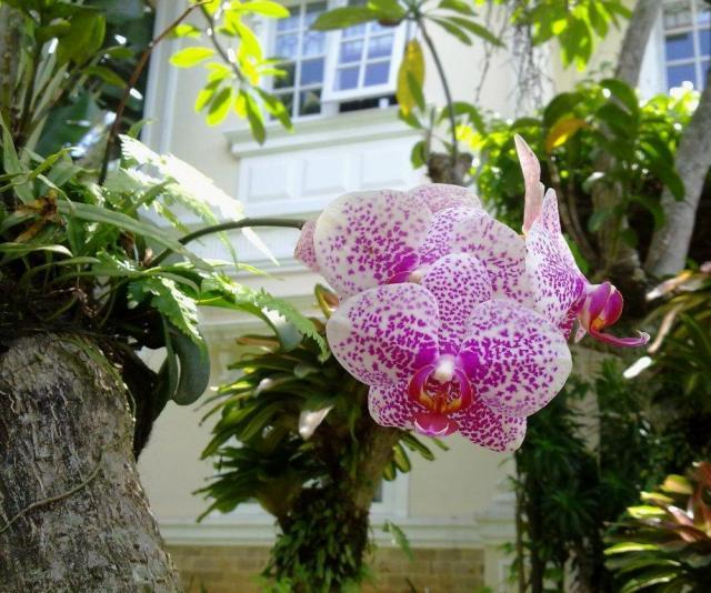 Warna & bentuk bunganya cantik nian..