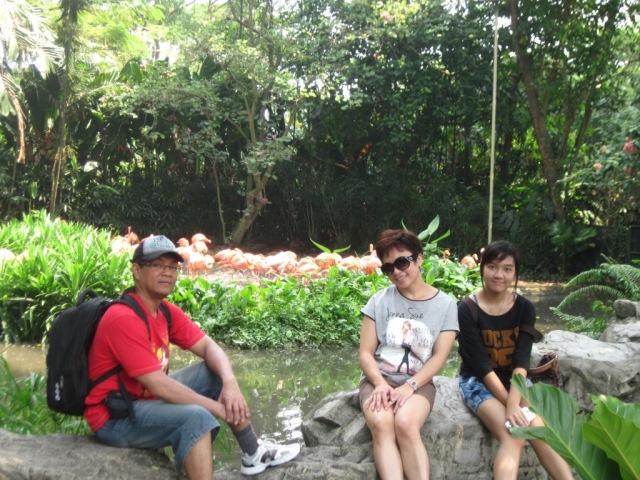 Dg istri dan anak, pose dulu dekat flaminggo