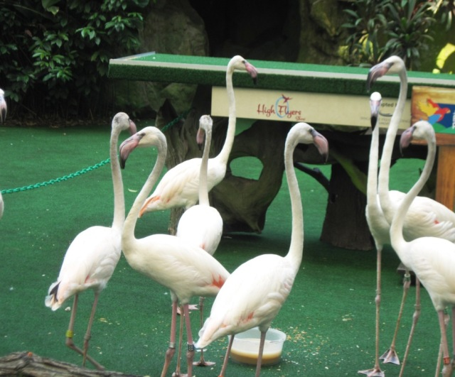Flaminggo siap diajak berfoto