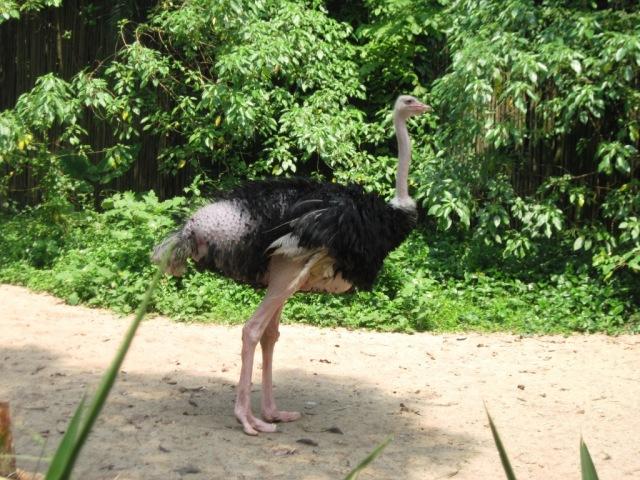 Burung paling gedhe di bumi niih