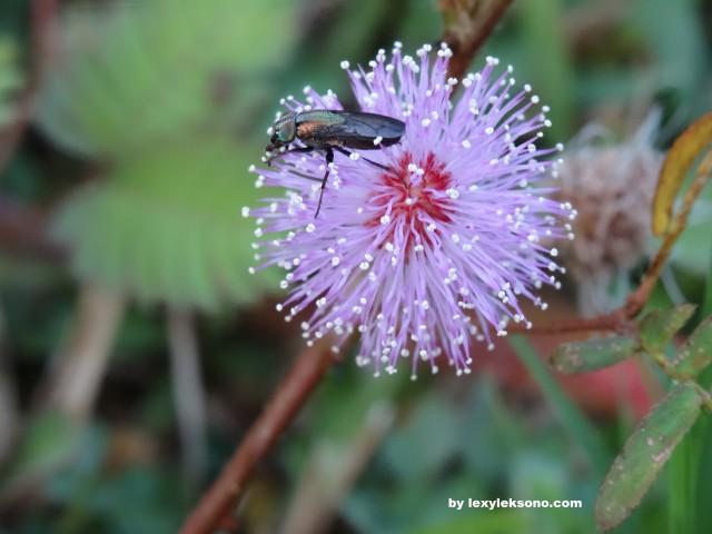 a little creature on a little flower