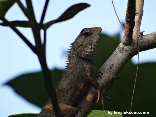 a cute little lizard