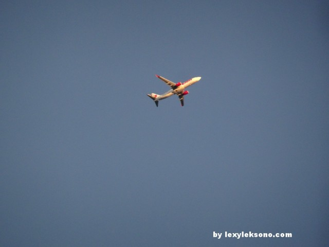 Lion air, my super-zoom worked really well
