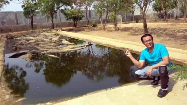 Buaya-buaya di kolam ini berukuran sangat besar2, untung mereka lagi tertidur