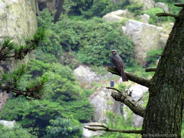 Burung yg cukup jauh ini saya foto dg zoom 72mm, f/6.3, ISO 640, 1/240