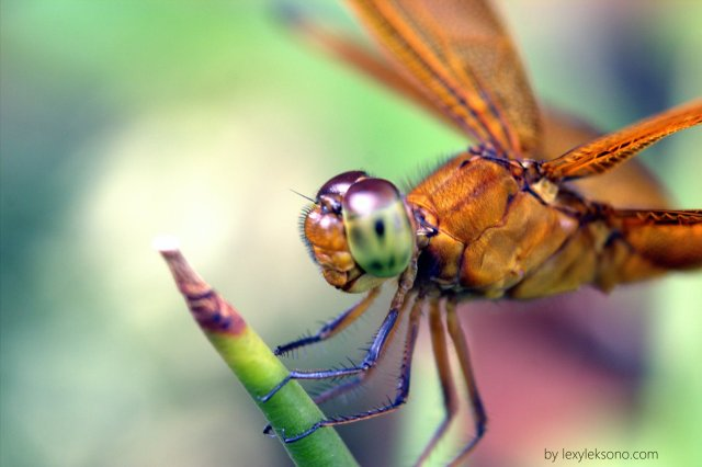 Look at this dragonfly is actually smiling.
